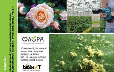 вебинар розы